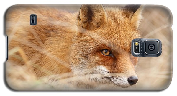 Red Fox On The Hunt Galaxy S5 Case by Roeselien Raimond