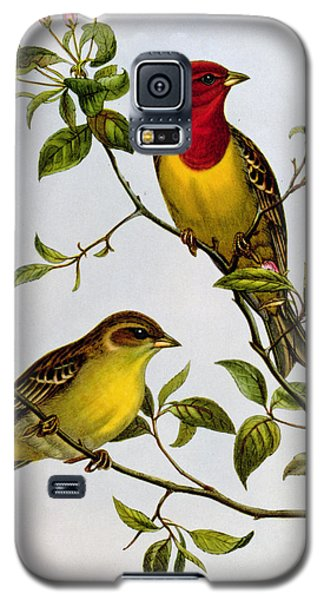 Red Headed Bunting Galaxy S5 Case by John Gould