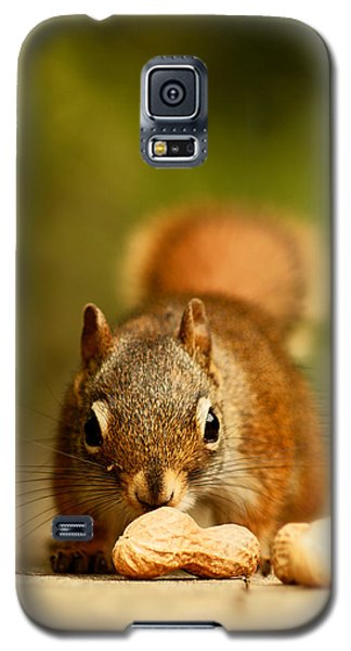 Red Squirrel   Galaxy S5 Case by Cale Best