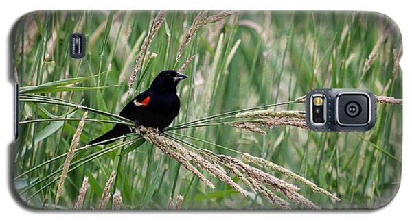 Summer Galaxy S5 Cases - Red-winged Blackbird Galaxy S5 Case by LeAnne Perry