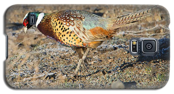 Ring-necked Pheasant Rooster Galaxy S5 Case by Mike Dawson
