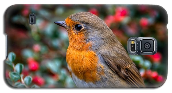 Robin Redbreast Galaxy S5 Case by Adrian Evans