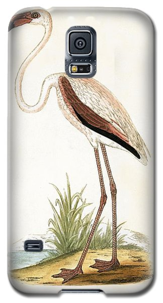 Rosy Flamingo Galaxy S5 Case by English School