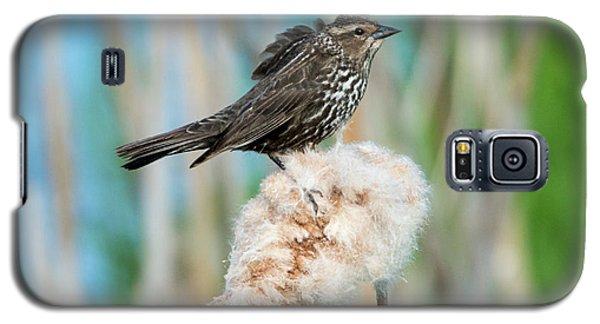 Ruffled Feathers Galaxy S5 Case by Mike Dawson