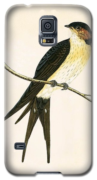 Rufous Swallow Galaxy S5 Case by English School