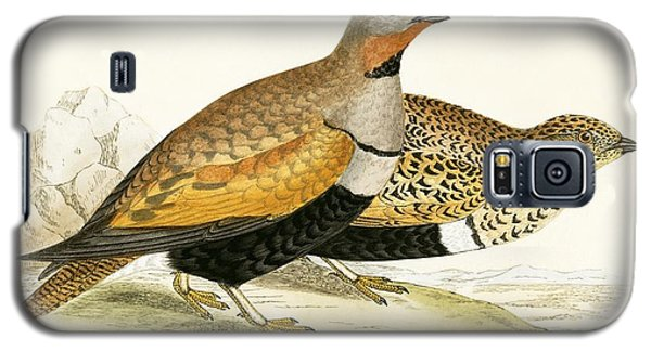 Sand Grouse Galaxy S5 Case by English School