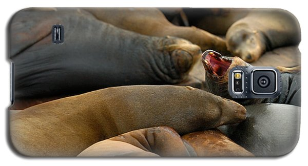 Sea Lions At Pier 39 San Francisco Galaxy S5 Case by Sebastian Musial