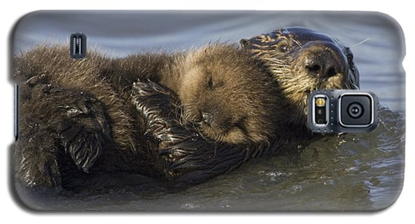 Sea Otter Mother With Pup Monterey Bay Galaxy S5 Case by Suzi Eszterhas