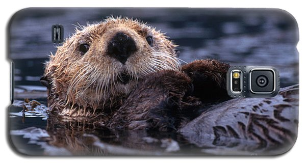 Sea Otter Galaxy S5 Case by Yva Momatiuk and John Eastcott and Photo Researchers