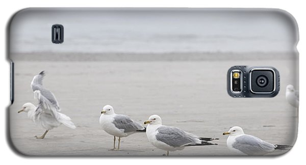 Seagulls On Foggy Beach Galaxy S5 Case by Elena Elisseeva