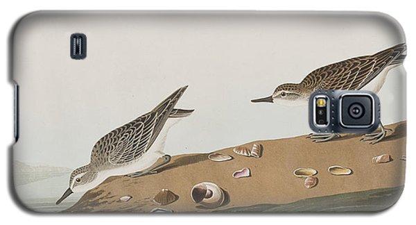 Semipalmated Sandpiper Galaxy S5 Case by John James Audubon