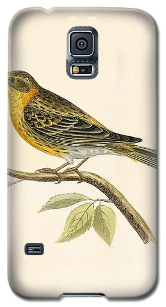 Serin Finch Galaxy S5 Case by English School