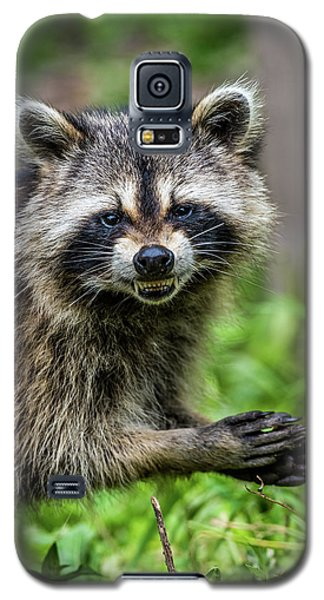 Smiling Raccoon Galaxy S5 Case by Paul Freidlund