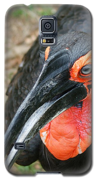 Southern Ground Hornbill Galaxy S5 Case by Ernie Echols