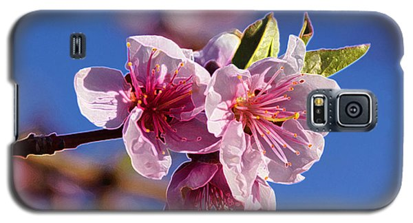 Flowers Galaxy S5 Cases - Spring Pink III Galaxy S5 Case by Gloria Pasko