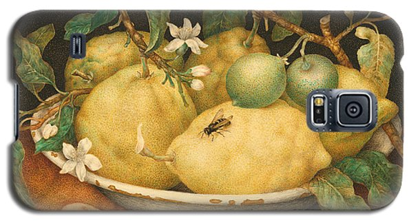 Still Life With A Bowl Of Citrons Galaxy S5 Case by Giovanna Garzoni
