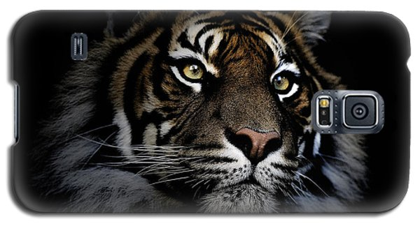 Sumatran Tiger Galaxy S5 Case by Avalon Fine Art Photography