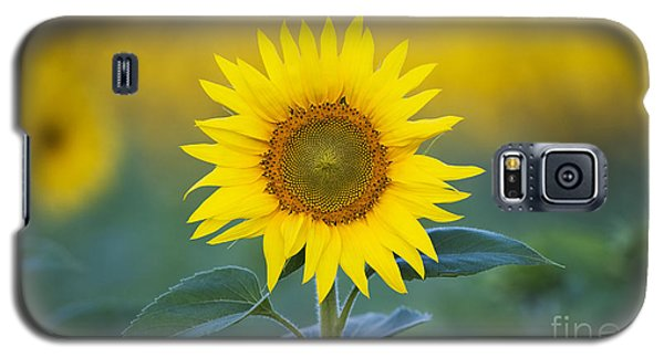 Sunflower Galaxy S5 Case by Tim Gainey
