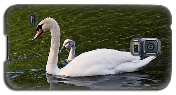 Swan Mother With Cygnet Galaxy S5 Case by Rona Black