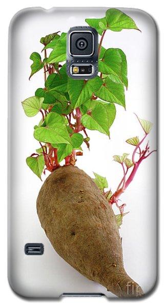 Sweet Potato Galaxy S5 Case by Gaspar Avila