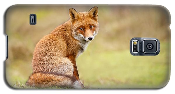 That Look - Red Fox Male Galaxy S5 Case by Roeselien Raimond