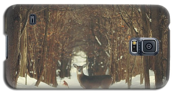 The Forest Of Snow White Galaxy S5 Case by Carrie Ann Grippo-Pike