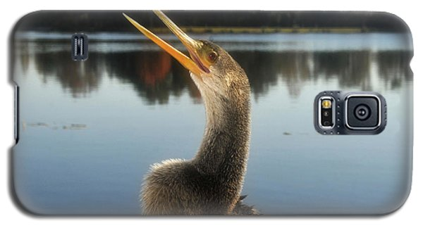 The Great Golden Crested Anhinga Galaxy S5 Case by David Lee Thompson