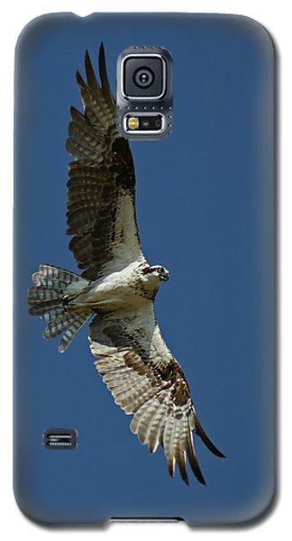 The Osprey Galaxy S5 Case by Ernie Echols