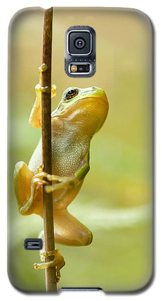 The Pole Dancer - Climbing Tree Frog  Galaxy S5 Case by Roeselien Raimond