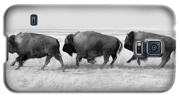 Three Buffalo In Black And White Galaxy S5 Case by Todd Klassy
