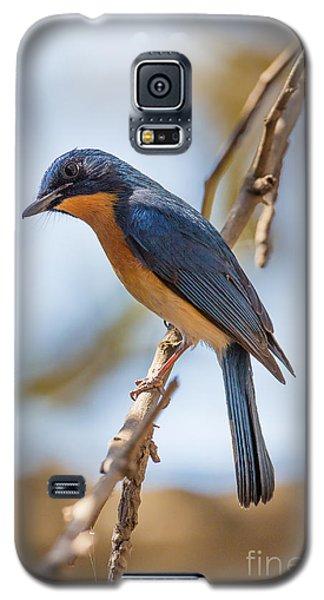 Tickells Blue Flycatcher, India Galaxy S5 Case by B. G. Thomson