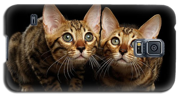 Two Bengal Kitty Looking In Camera On Black Galaxy S5 Case by Sergey Taran