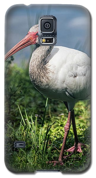 Walk On The Wild Side  Galaxy S5 Case by Saija Lehtonen