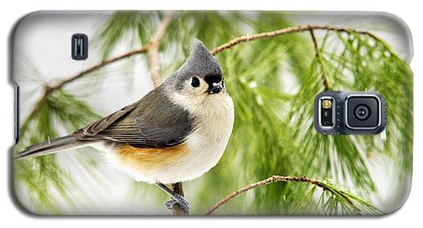 Winter Pine Bird Galaxy S5 Case by Christina Rollo