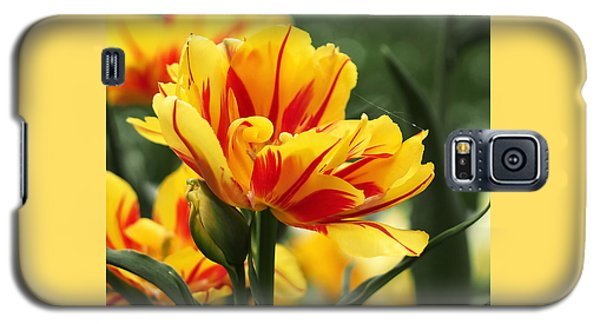 Flowers Galaxy S5 Cases - Yellow and Red Triumph Tulips Galaxy S5 Case by Rona Black