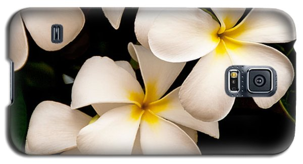 Plant Galaxy S5 Cases - Yellow and White Plumeria Galaxy S5 Case by Brian Harig