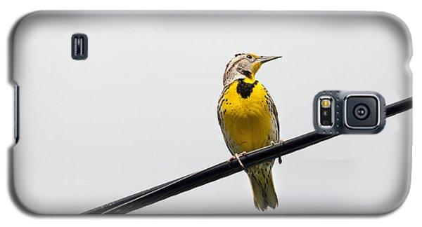 Yellow Bird Galaxy S5 Case by Rebecca Cozart