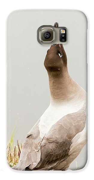 A Light Mantled Albatross Galaxy S6 Case by Ashley Cooper