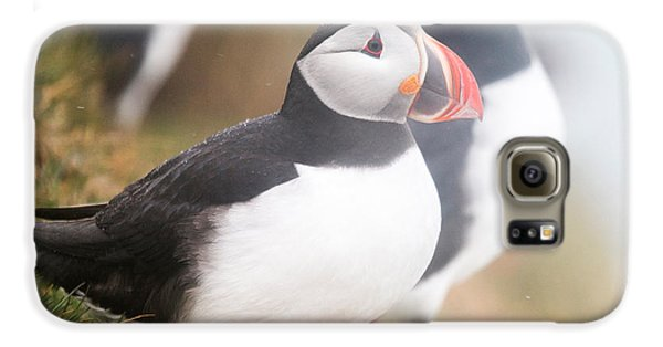 Atlantic Puffins Fratercula Arctica Galaxy S6 Case by Panoramic Images