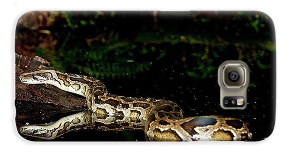 Burmese Python, Python Molurus Galaxy S6 Case by David Northcott
