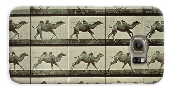 Camel Galaxy S6 Case by Eadweard Muybridge