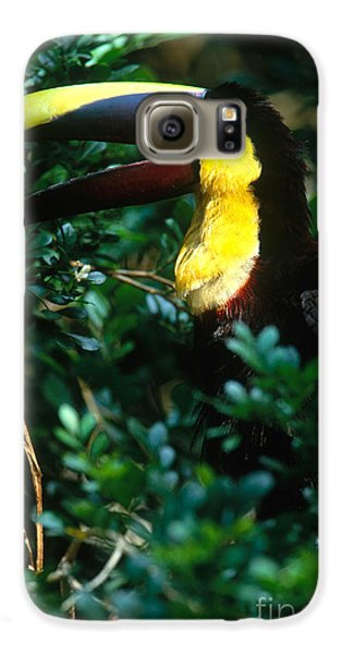 Chestnut-mandibled Toucan Galaxy S6 Case by Art Wolfe