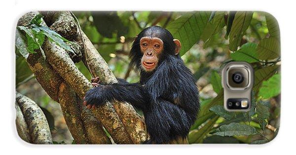 Chimpanzee Baby On Liana Gombe Stream Galaxy S6 Case by Thomas Marent