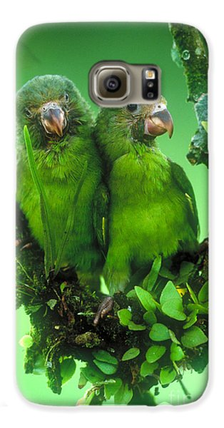 Cobalt-winged Parakeets Galaxy S6 Case by Art Wolfe