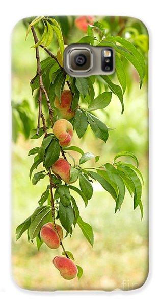 Donut Peaches Galaxy S6 Case by Iris Richardson