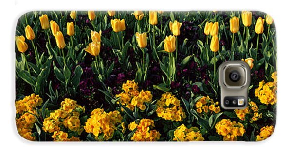 Flowers In Hyde Park, City Galaxy S6 Case by Panoramic Images