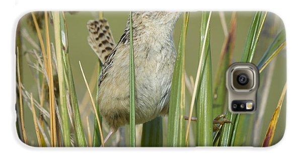 Grass Wren Galaxy S6 Case by John Shaw