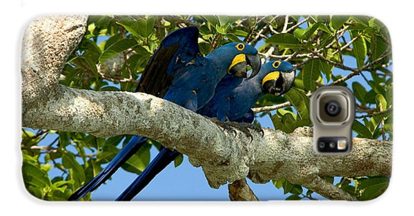 Hyacinth Macaws, Brazil Galaxy S6 Case by Gregory G. Dimijian, M.D.