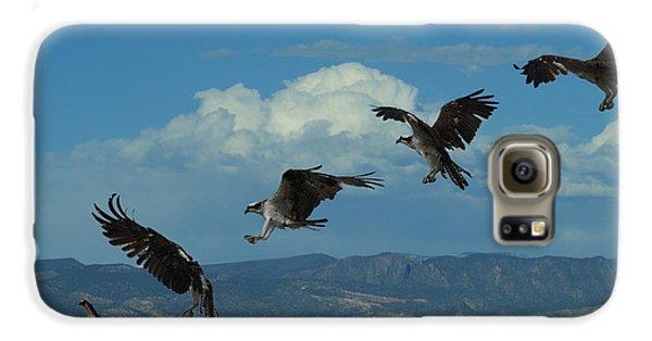 Landing Pattern Of The Osprey Galaxy S6 Case by Ernie Echols