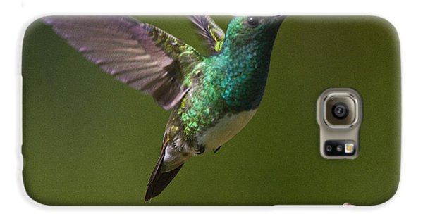 Snowy-bellied Hummingbird Galaxy S6 Case by Heiko Koehrer-Wagner